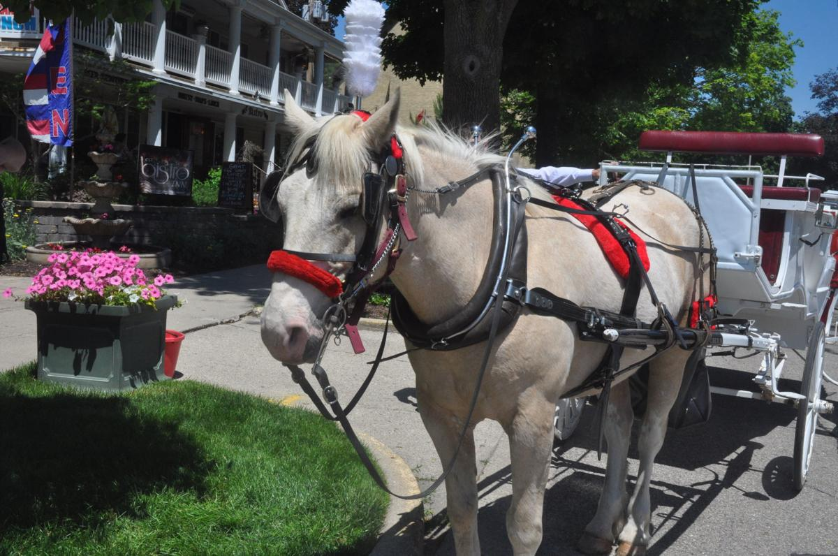 Rebox the horse prepares for a day of carriage rides through Lake Geneva's Maple Park Historic District