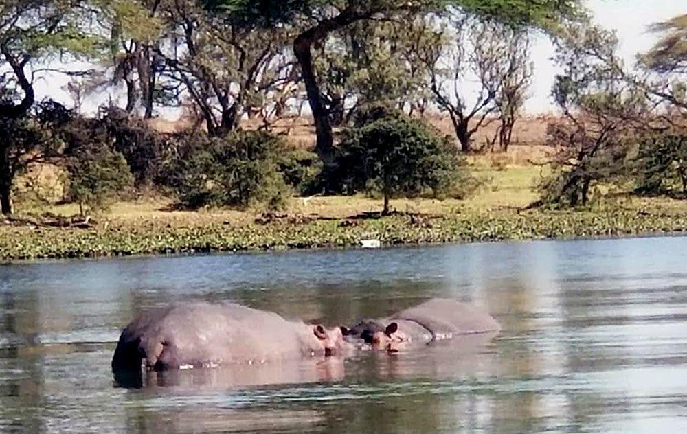 052219_tct_con_hippos