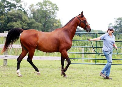 con_horsefundraiser_080818