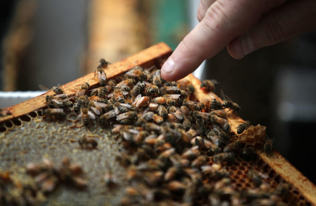 JVG_210701_BEES02