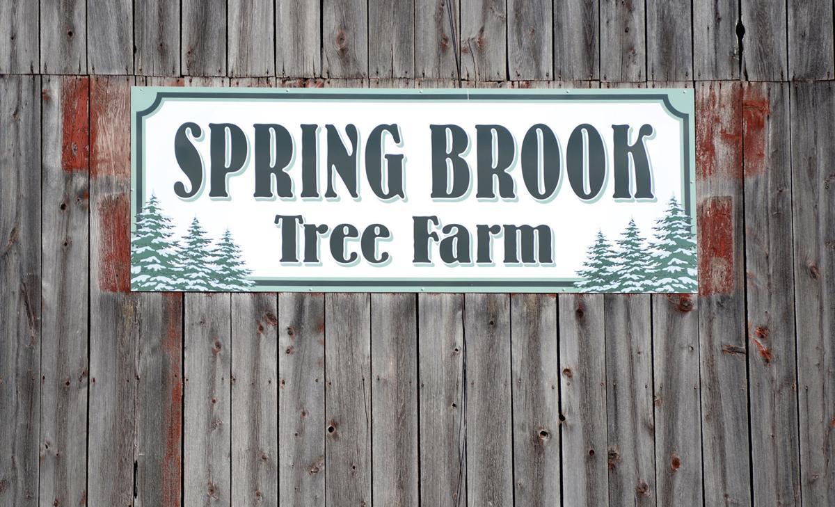 12122018_tct_bw_spring_brook_6