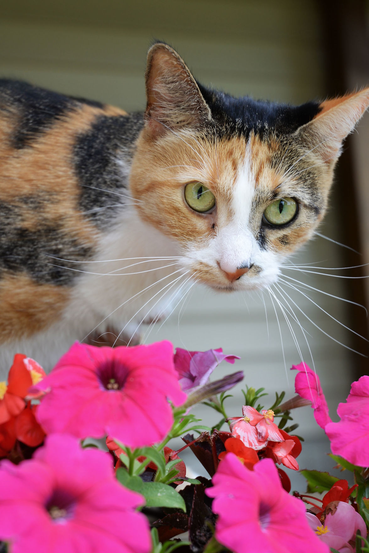 Experts Offer Advice To Weed Out Plants Toxic To Pets Lifestyles