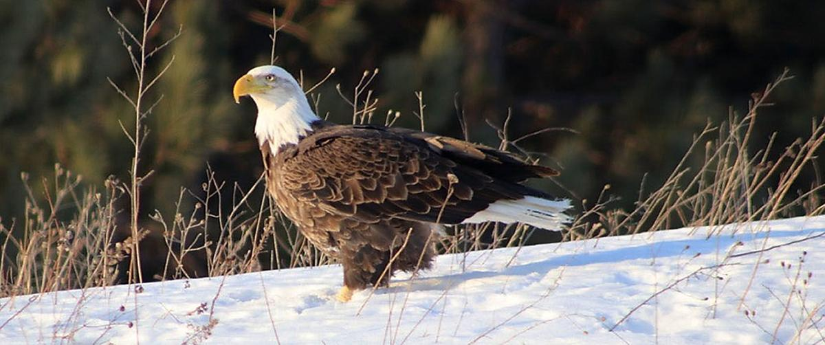 020720_con_Eagle