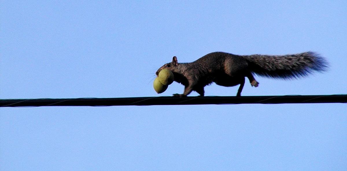 083019_con_squirrel