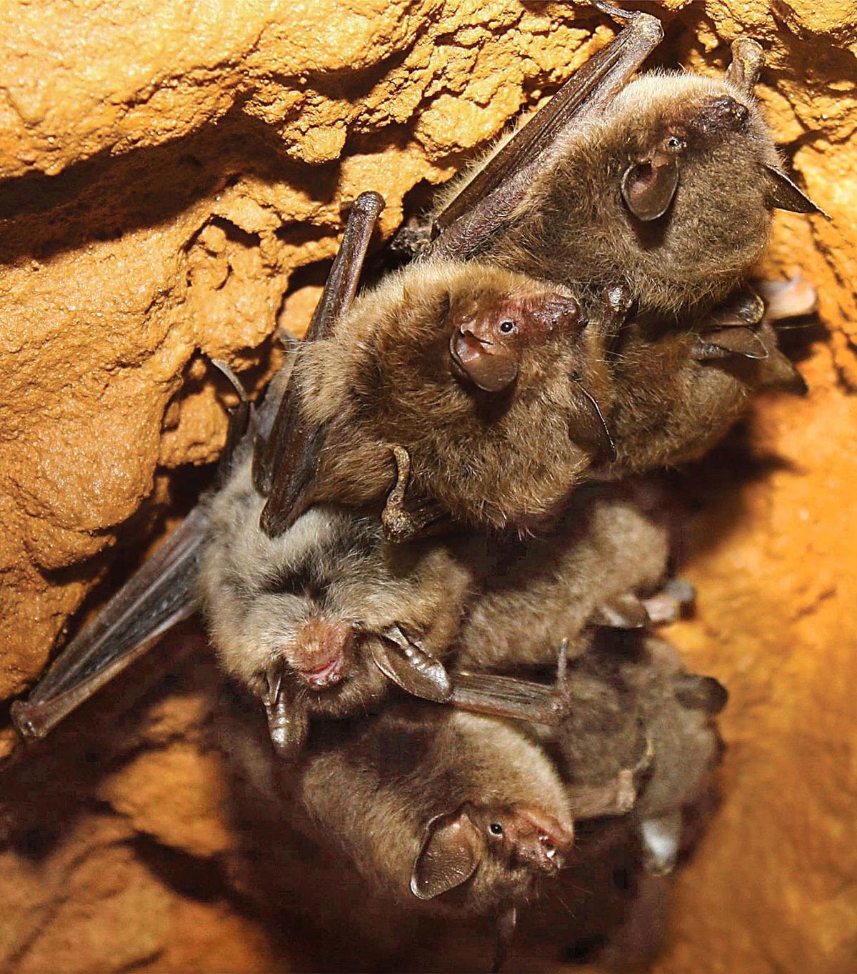con_Bats_1_052618
