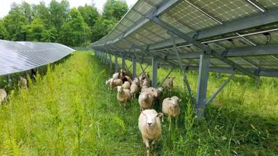 Solar Grazing - 2