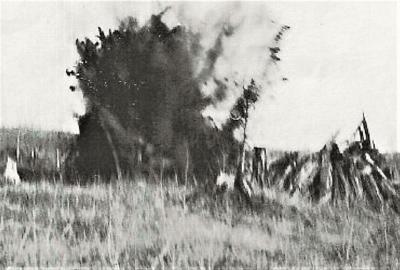 white pine stump blast