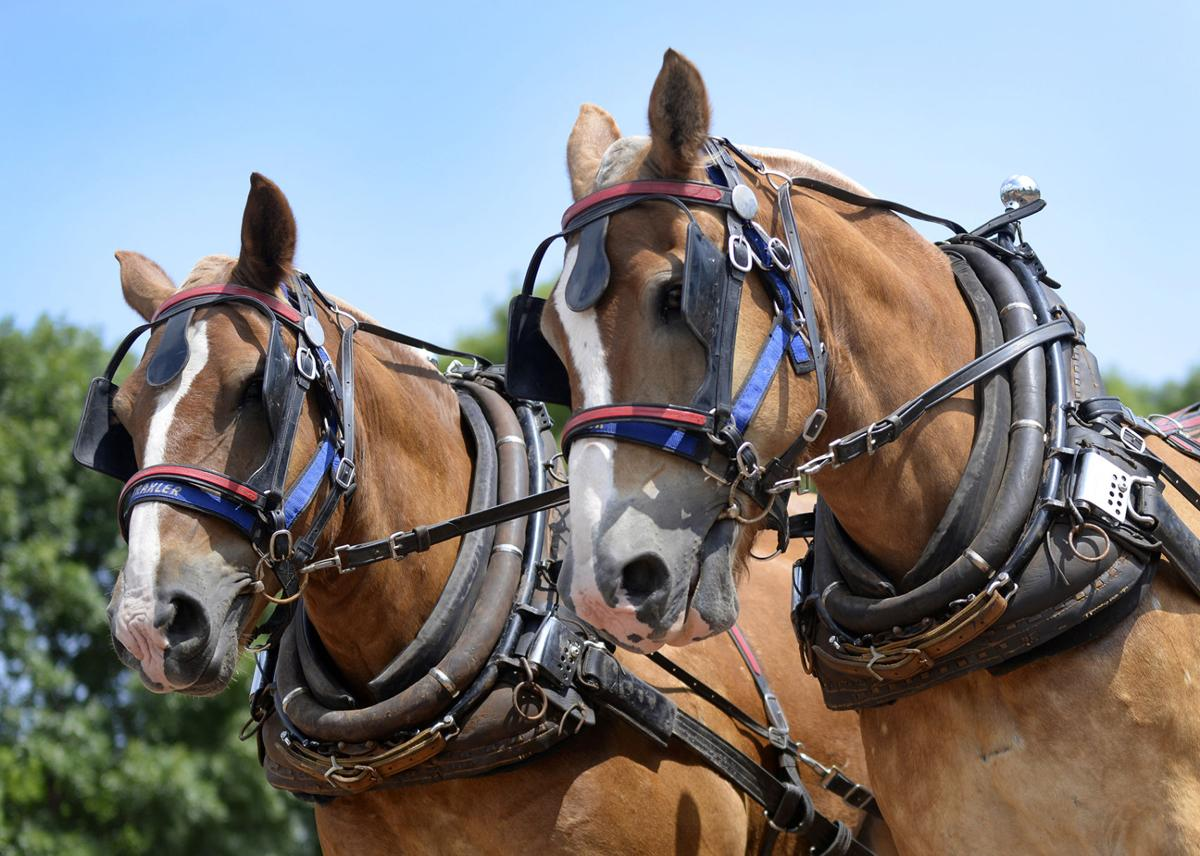 BW Horse Pulls 081518