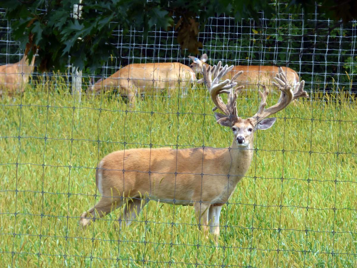 nj_deerfarm_3_082918