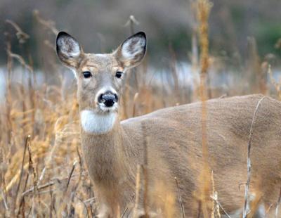 12052018_tct_bw_deer_season