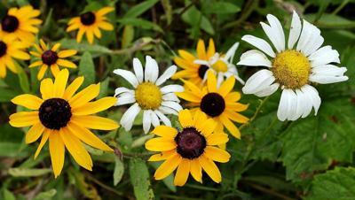 07152020_tct_dr_daisy