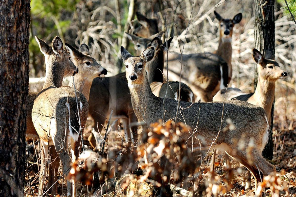 dr_NEW_Deer1a_031610