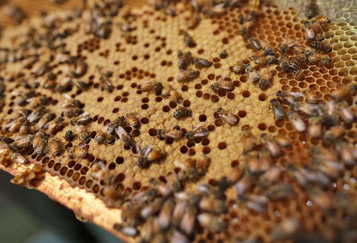 JVG_210701_BEES03