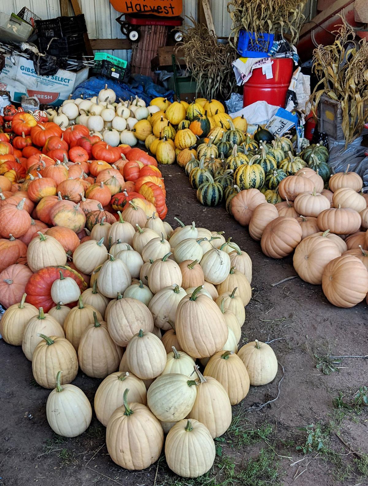 con_Pumpkin_2_1092618-1