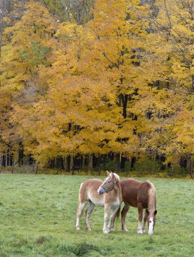 Fall forage (copy)