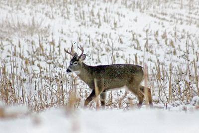 111519_con_Deer_3