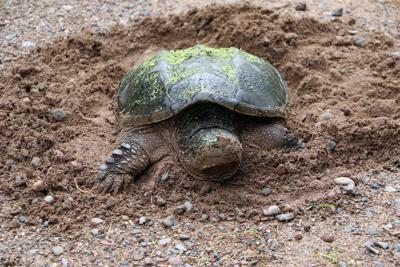 06022021_tct_con_Turtle