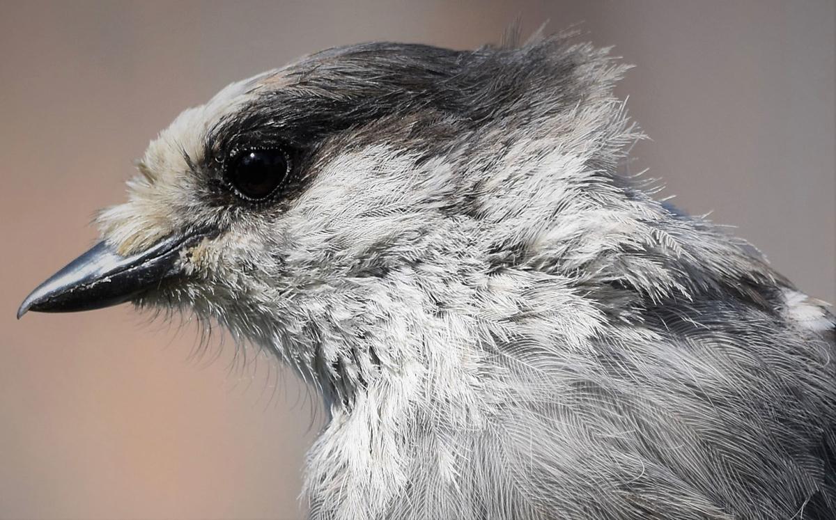 Bird report: Audubon Society has dire forecast | Getting-out ... on house wren house plans, purple martin house plans, pvc bluebird house plans, national wildlife bird house plans,