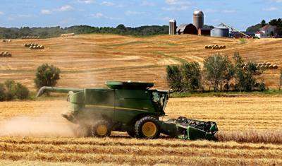 Harvesting Rye