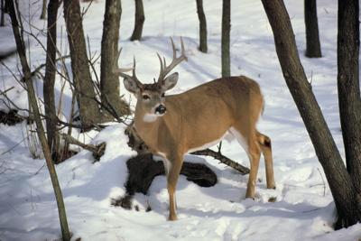 Deer season is upon us!