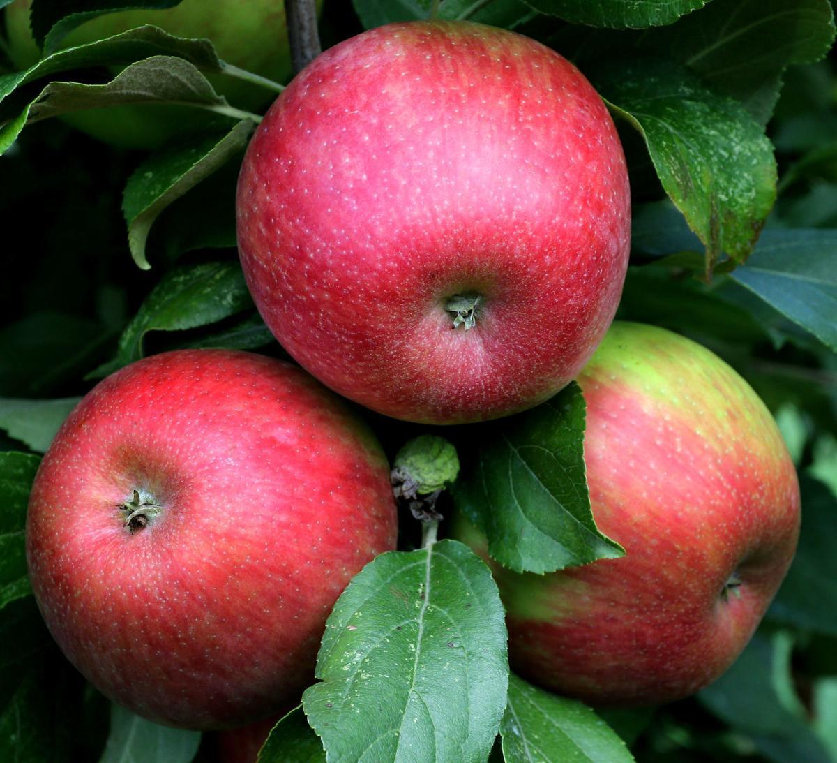 090419_dr_apple_11a