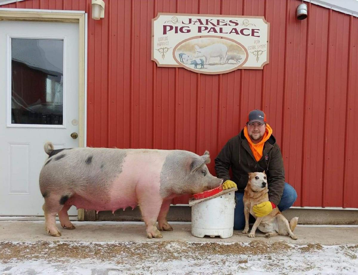 Jake's Pig Palace entering 20th year   Farm-news   leadertelegram com