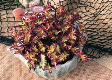 Select a Quality Potting Mix for Gardening success