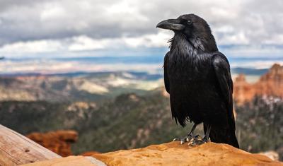 111519_con_Raven
