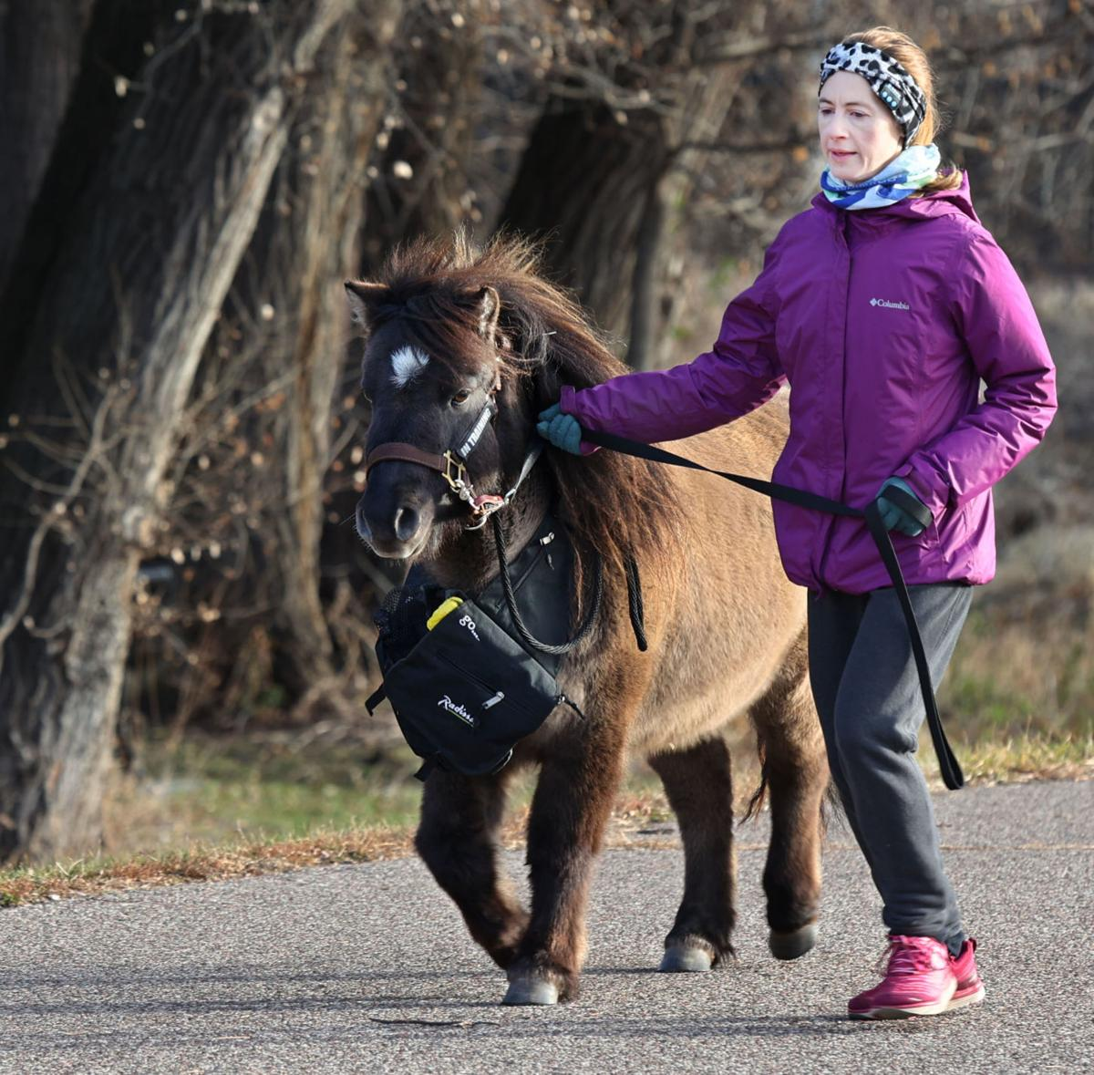 Therapy Horse