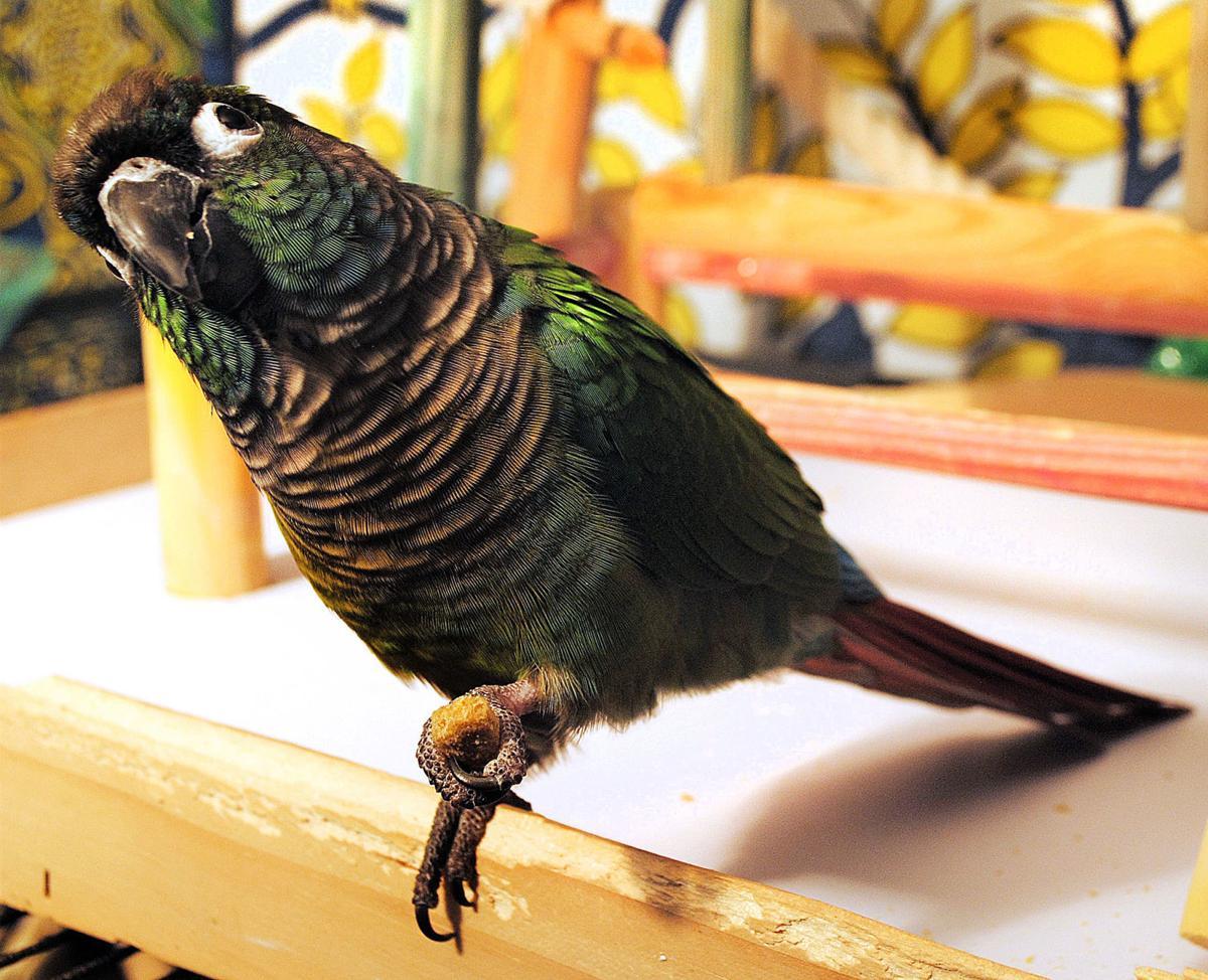 032919_con_bird_house_13