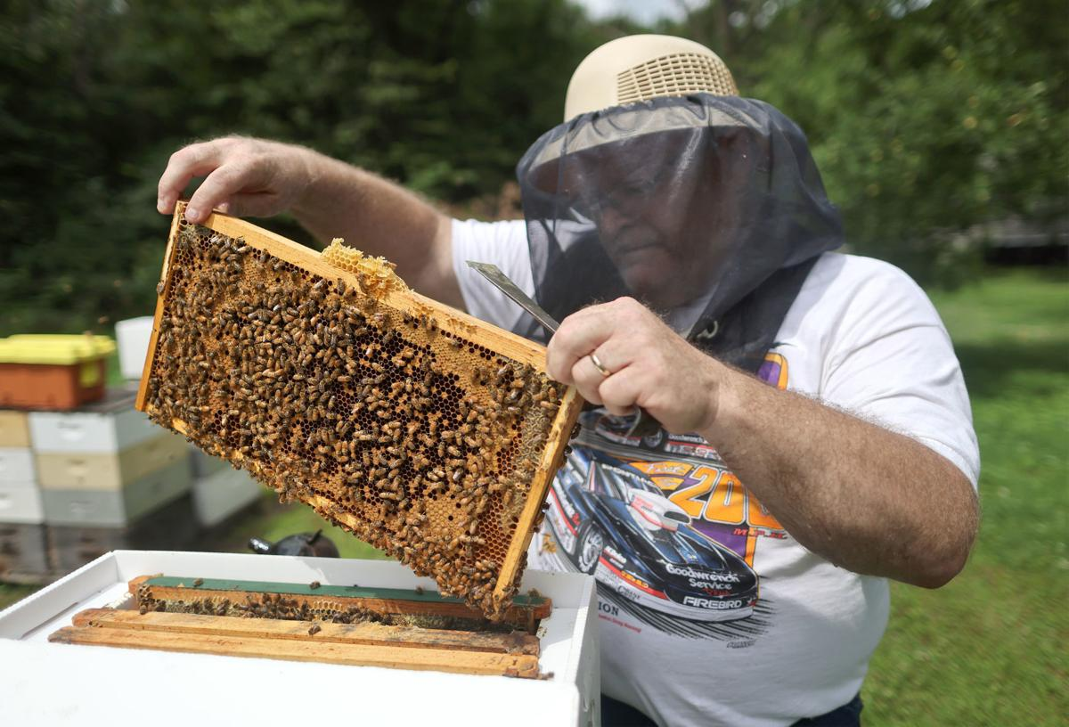 JVG_210701_BEES01