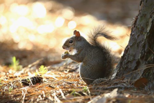 This Naughty Squirrel Is Vandalizing Christmas Lights In New Jersey
