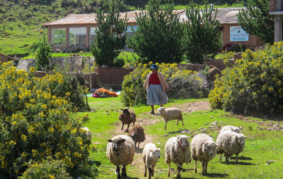 LAKE TITICACA, PERU - Luquina Chico offers visitors a chance to live in a rural community that has changed little over the decades. By offering homestays, a practice known as turismo vivencial, the community has set up an economic model where the local families can benefit equally from guests.