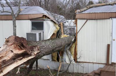 Fallen tree splits area mobile home in two