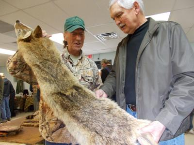 Fur flies at trappers gathering