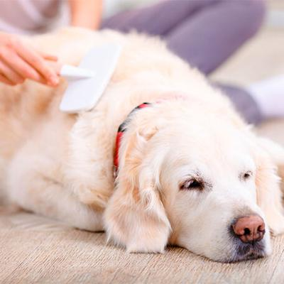 5 Ways to Give Your Furry Friend a Little Extra Love