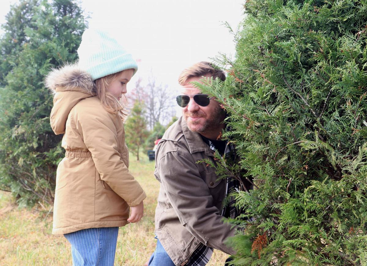 Trees Photo 3