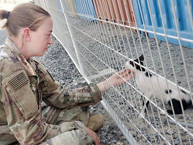 Community help needed to bring soldier's  rescued cats back with her from the Middle East
