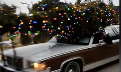 Secure your Christmas tree for transport