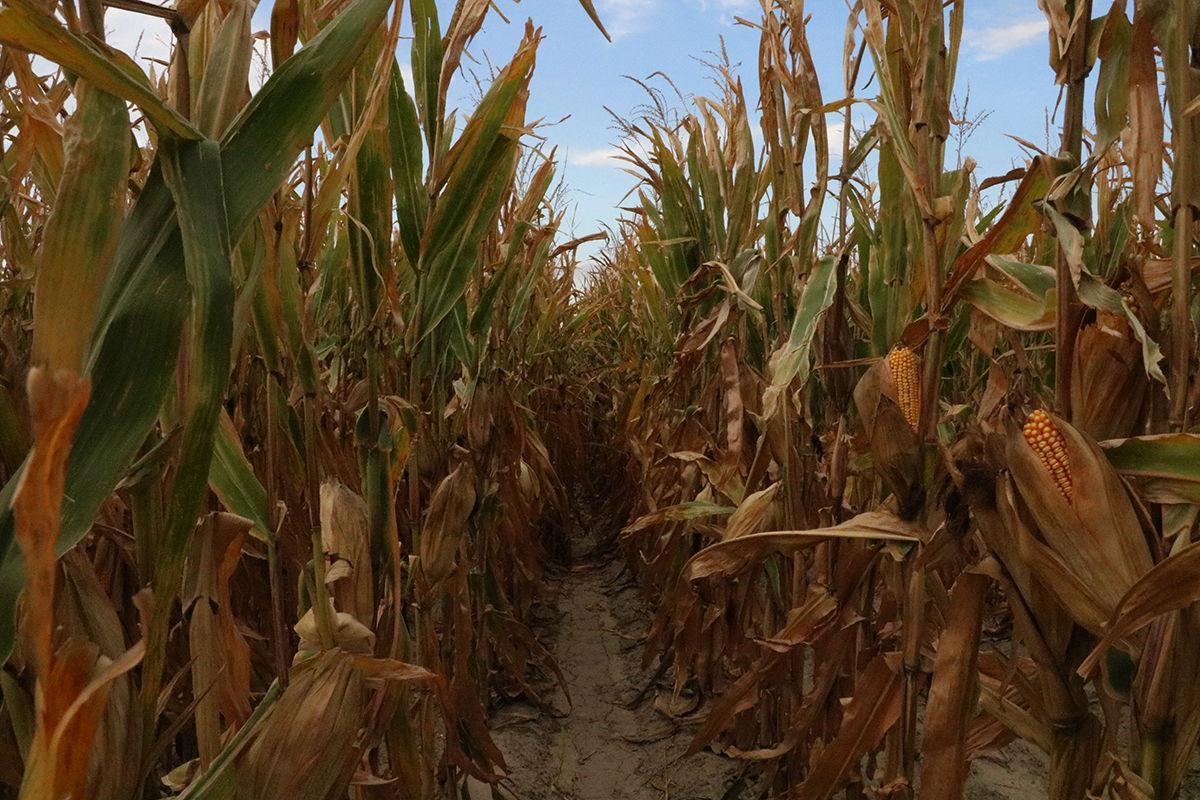 Dawson/Gosper County FSA, Extension to Host Farm Bill Education Meeting for Area Producers