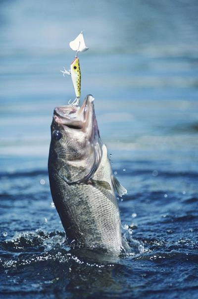 Changes to sport fishing orders take effect Jan. 1, 2020