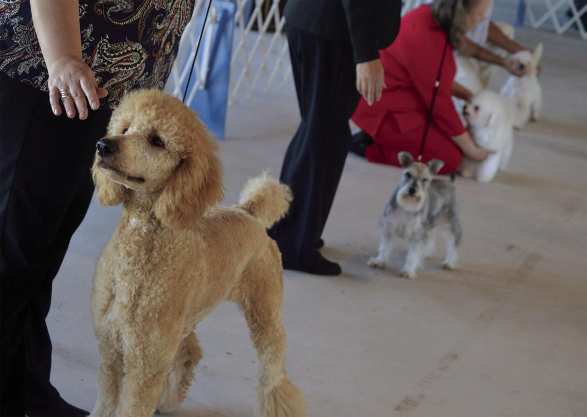 All Breed Conformation Dog Show