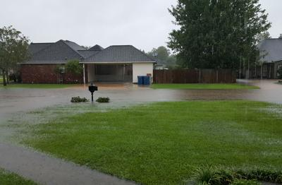Willows flooded