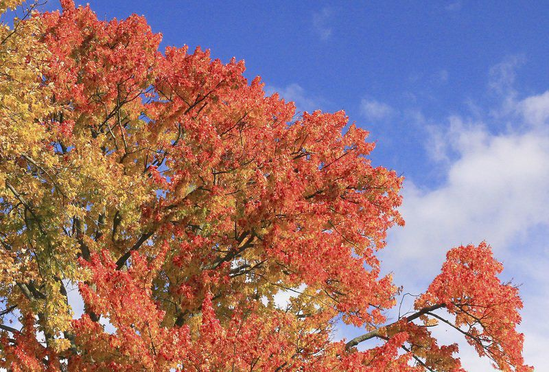 THE GREAT OUTDOORS: Autumn sightings of late