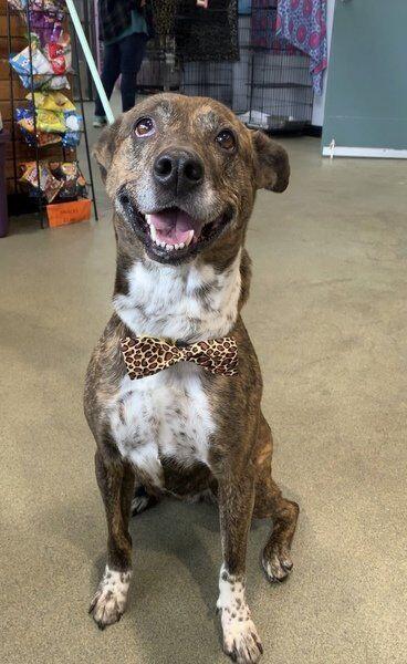 'Bubba's Bow Ties' benefits SPCA