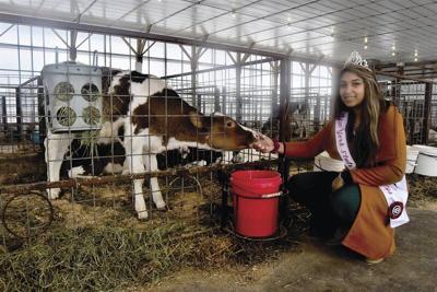 Dairy princess pioneer charts unique course
