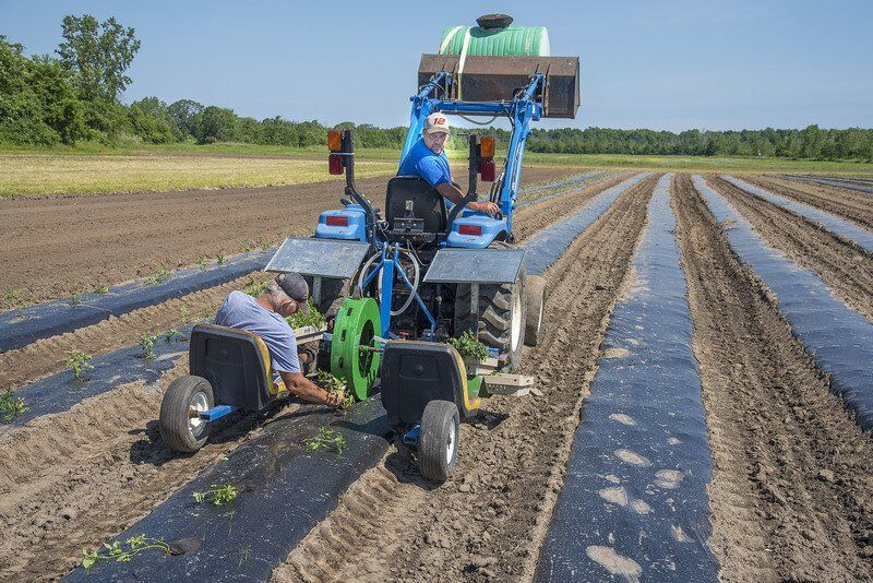 BITTNER: How much do you know about agriculture in Niagara County?
