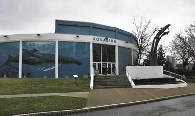 Aquarium of Niagara officials unveil 'bold' plan for the future
