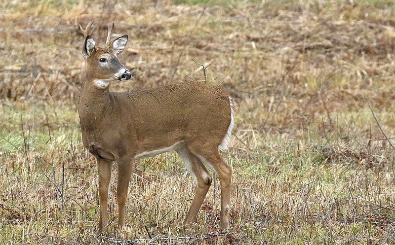 THE GREAT OUTDOORS: Deer ticks a growing peril for outdoor folks