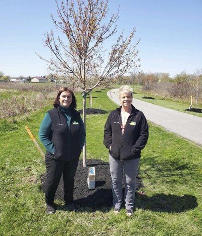 Lockport's ever-growing Memorial Tree Garden